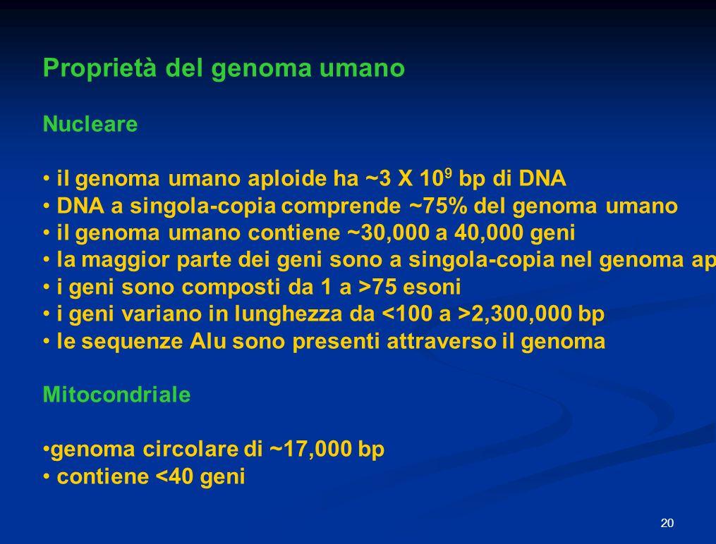 Proprietà del genoma umano Nucleare il genoma umano aploide ha ~3 X 10 9 bp di DNA DNA a singola-copia comprende ~75% del genoma umano il genoma umano contiene ~30,000 a 40,000 geni la maggior parte dei geni sono a singola-copia nel genoma aploide i geni sono composti da 1 a >75 esoni i geni variano in lunghezza da 2,300,000 bp le sequenze Alu sono presenti attraverso il genoma Mitocondriale genoma circolare di ~17,000 bp contiene <40 geni 20