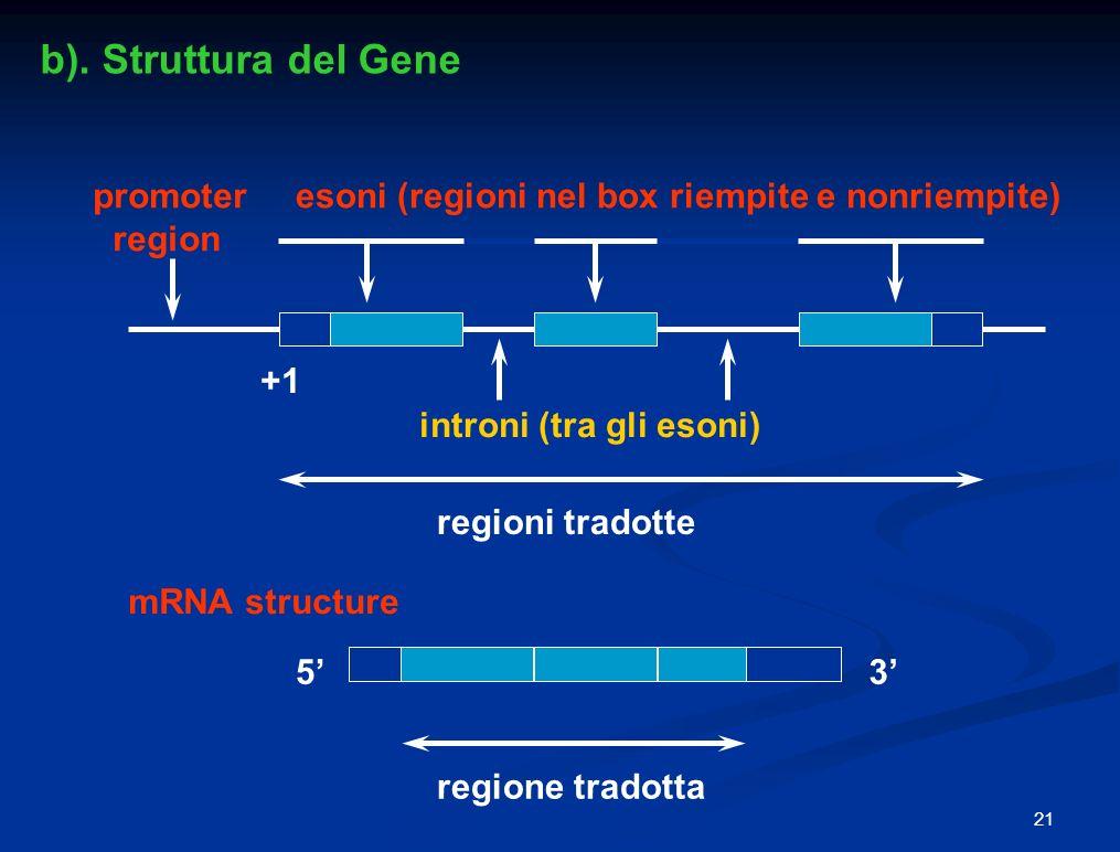 53 promoter region esoni (regioni nel box riempite e nonriempite) introni (tra gli esoni) regioni tradotte regione tradotta mRNA structure +1 b).