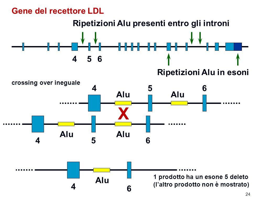 Gene del recettore LDL Ripetizioni Alu presenti entro gli introni Ripetizioni Alu in esoni 4 4 4 5 5 56 6 6 Alu X 4 6 crossing over ineguale 1 prodotto ha un esone 5 deleto (laltro prodotto non è mostrato) 24