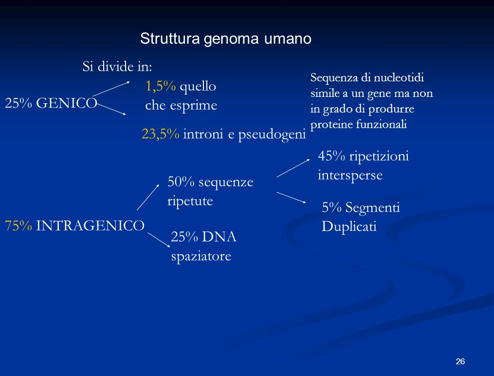 Struttura genoma umano Si divide in: 25% GENICO 50% sequenze ripetute 5% Segmenti Duplicati 75% INTRAGENICO 45% ripetizioni intersperse 25% DNA spazia