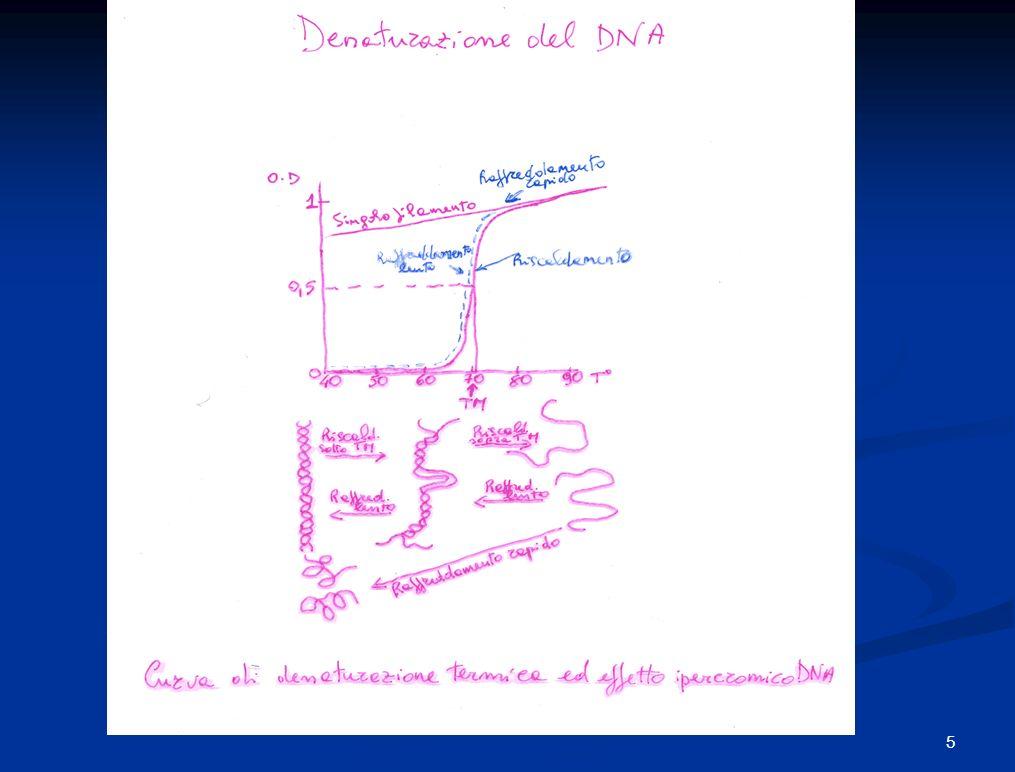 10 -5 10 0 10 -4 10 -3 10 -1 10 4 10 3 10 2 10 -6 10 -2 10 1 10 6 10 2 10 3 10 510 10 9 10 8 10 0 10 4 10 7 Complessità espressa come coppie di basi (bp) CotCot 12345 1 = poly(dT)-poly(dA) 2 = DNA satellite umano purificato 3 = DNA batteriofago T4 4 = DNA genomico di E.