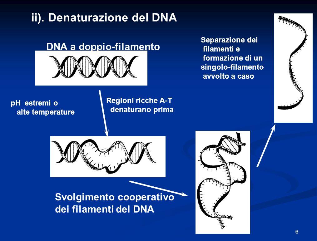 Nel genoma umano le sequenze ripetute costituiscono almeno il 50% del totale e sono suddivise in 5 classi: sequenze ripetute derivate da trasposoni (intersperse) copie inattive di geni ripetizioni di sequenze semplici (minisatelliti e microsatelliti): (A)n, (CA)n, (CGG)n duplicazioni segmentali sequenze ripetute in tandem (centromeri, telomeri, cluster ribosomali) Il 45% delle ripetizioni intersperse è dato da trasposoni e retrotrasposoni.