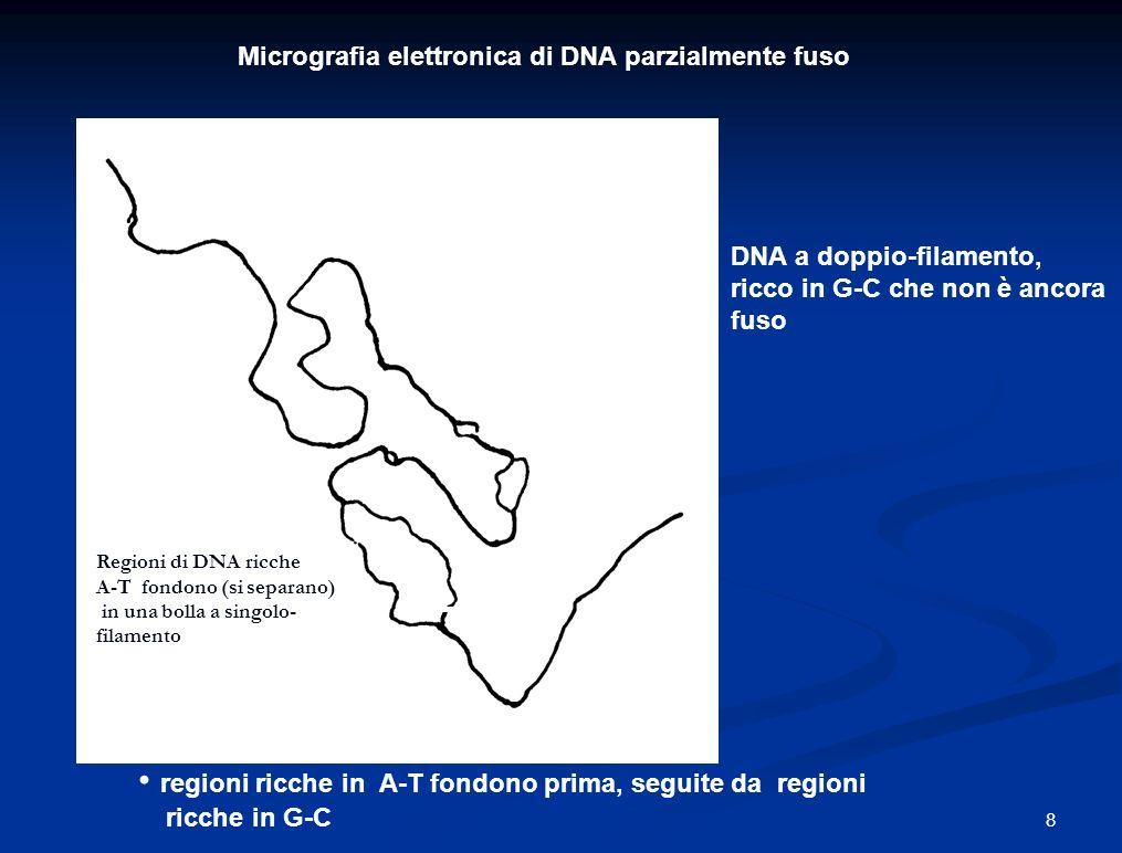 Classi di DNA ripetitivo Ripetizioni Intersparse (disperse) (e.g., Alu sequences) TTAGGGTTAGGGTTAGGGTTAGGG Ripetizioni Tandem (e.g., microsatelliti) GCTGAGG 19