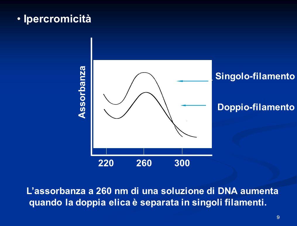 Ipercromicità Lassorbanza a 260 nm di una soluzione di DNA aumenta quando la doppia elica è separata in singoli filamenti.