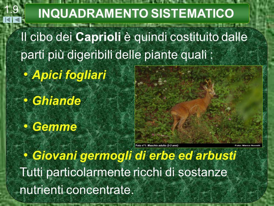 1.9 Il cibo dei Caprioli è quindi costituito dalle parti più digeribili delle piante quali : Tutti particolarmente ricchi di sostanze nutrienti concen