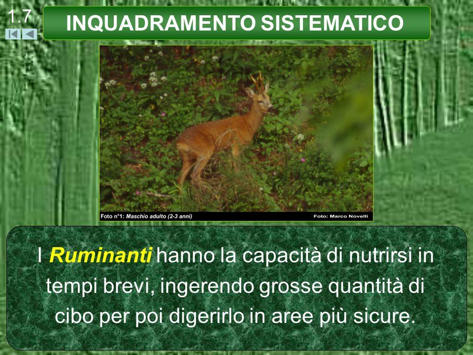 1.7 I Ruminanti hanno la capacità di nutrirsi in tempi brevi, ingerendo grosse quantità di cibo per poi digerirlo in aree più sicure. INQUADRAMENTO SI