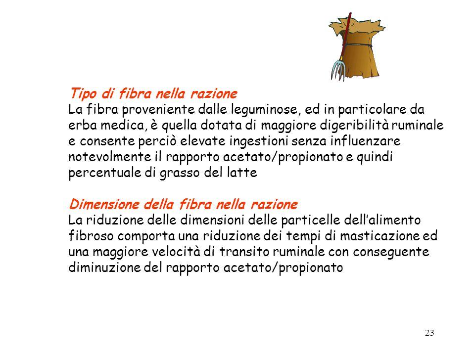 22 Contenuto in fibra nella razione La percentuale di grasso del latte è positivamente correlata con la concentrazione fibrosa della razione per effet