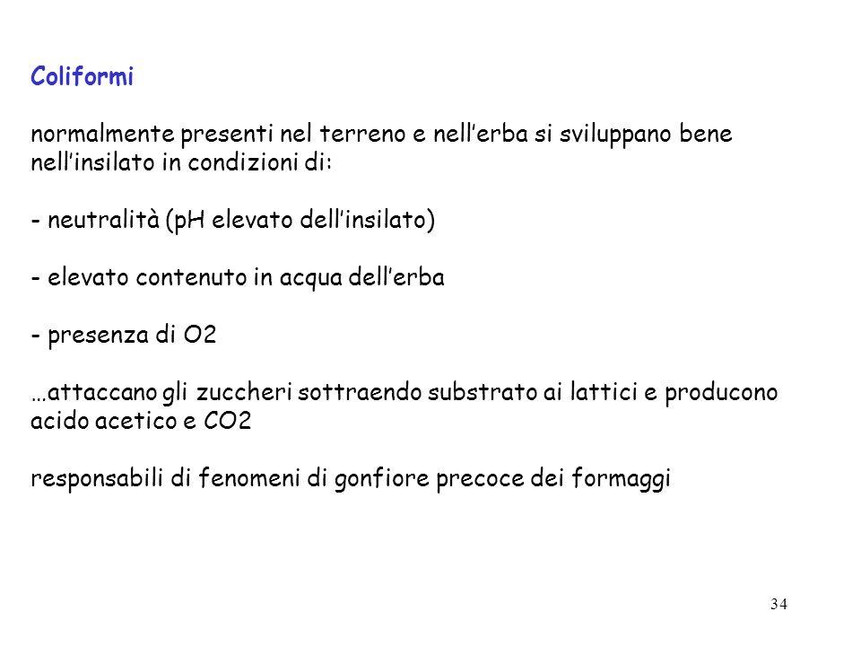 33 Influenza dellimpiego di insilati nella razione sulla qualità del latte maggiore rischio di contaminazione con Enterobateriacee (coliformi) Sporige