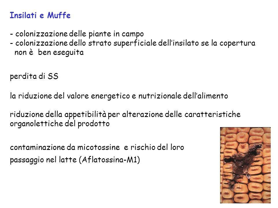 46 Per ridurre la contaminazione del latte da sporigeni somministrare gli insilati lontano dalla sala di mungitura igiene dellanimale lettiera fenomen