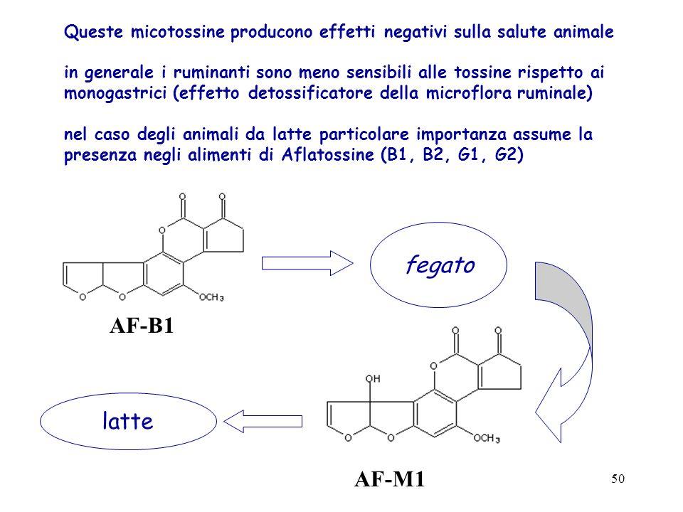 49 Aspergillus flavus and A. parasiticus producono: aflatossine