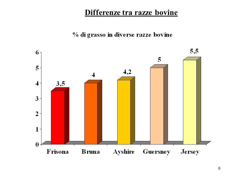 6 Differenze tra razze bovine