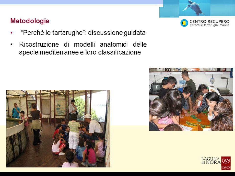 Metodologie Perché le tartarughe: discussione guidata Ricostruzione di modelli anatomici delle specie mediterranee e loro classificazione