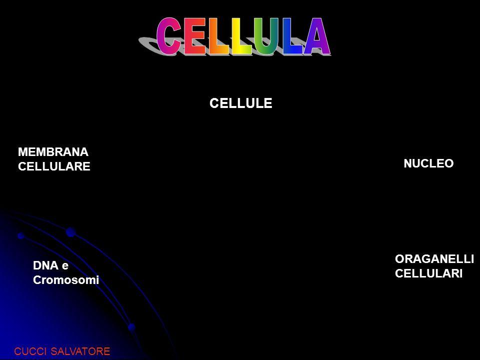 CELLULE MEMBRANA CELLULARE NUCLEO DNA e Cromosomi ORAGANELLI CELLULARI CUCCI SALVATORE