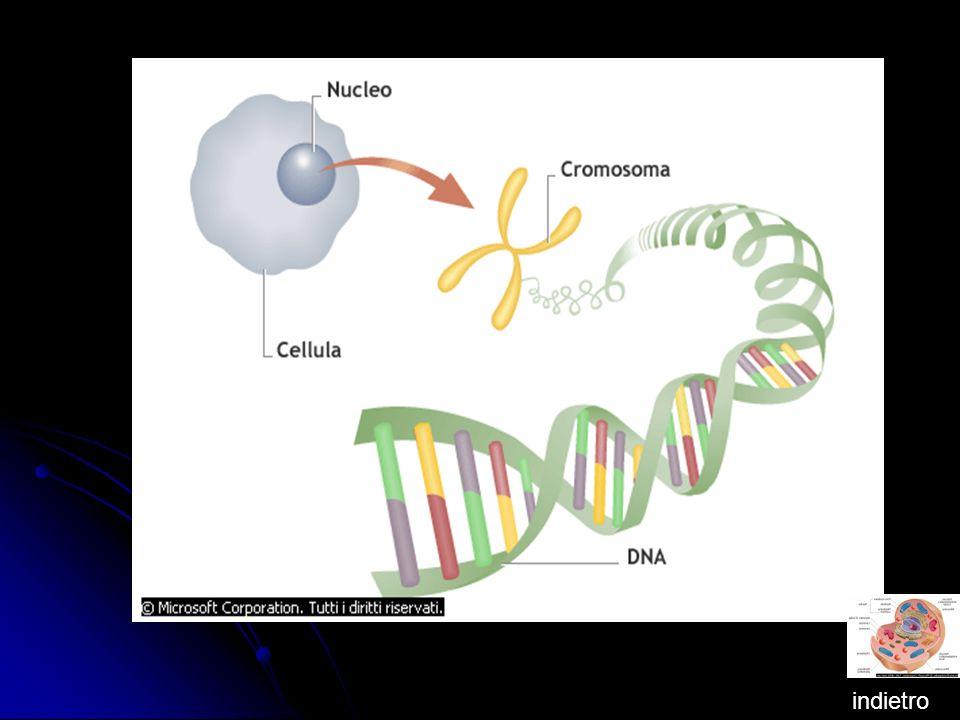 ORGANELLI CELLULARI Gli organelli cellulari si dividono : Ribosomi, Cloropasti, Mitocondri, Vacuolo e Reticolo Endoplasmatico.