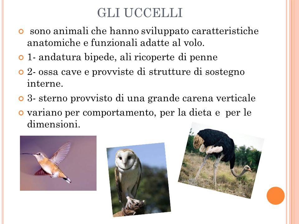 sono animali che hanno sviluppato caratteristiche anatomiche e funzionali adatte al volo. 1- andatura bipede, ali ricoperte di penne 2- ossa cave e pr
