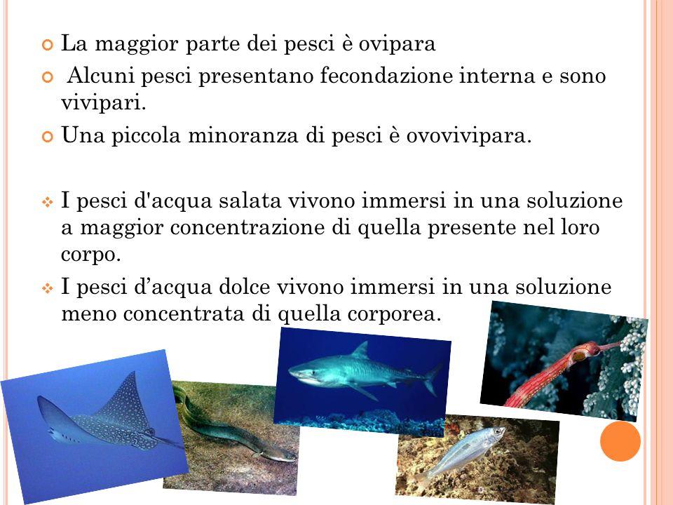 La maggior parte dei pesci è ovipara Alcuni pesci presentano fecondazione interna e sono vivipari. Una piccola minoranza di pesci è ovovivipara. I pes