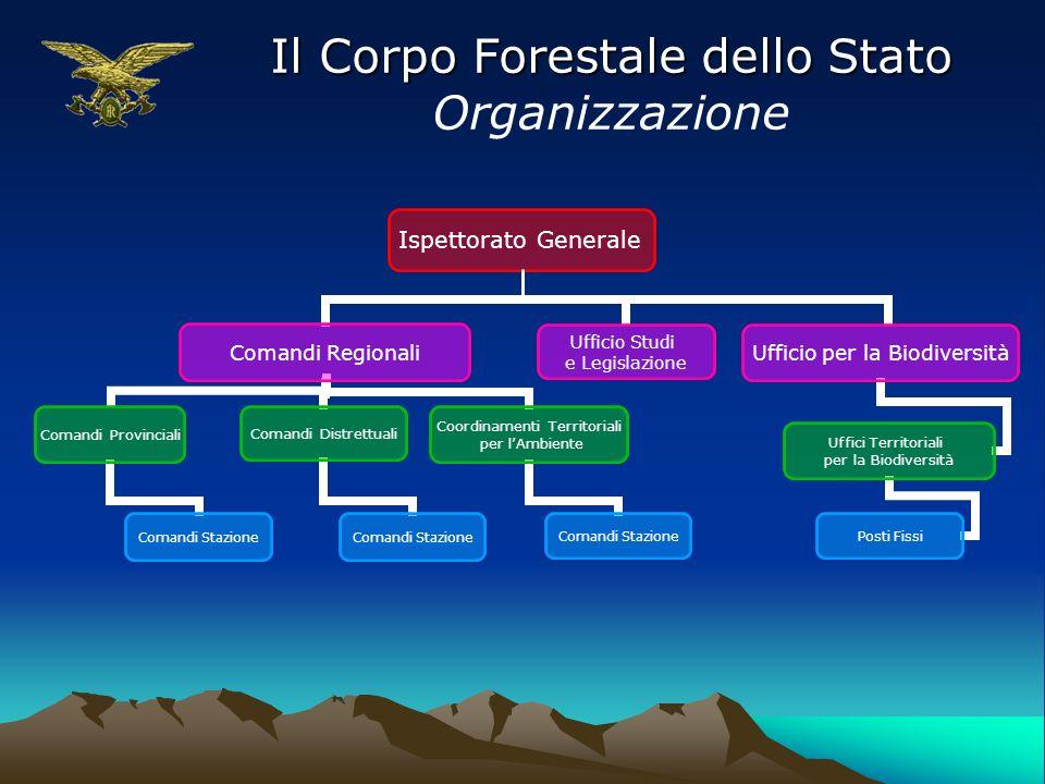 Il Corpo Forestale dello Stato Organizzazione