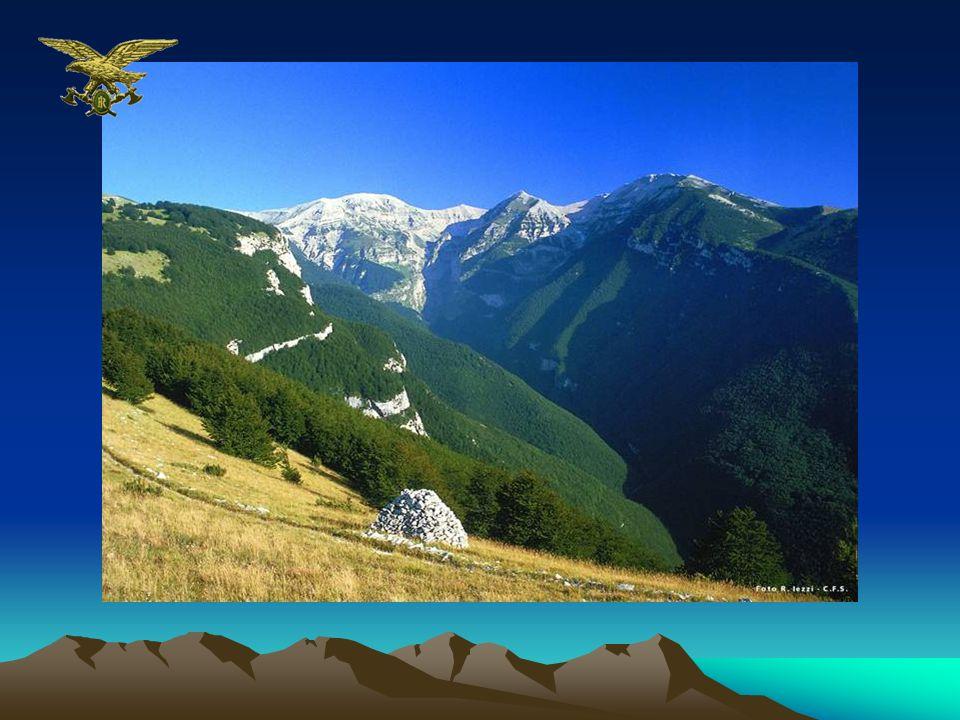 Aree Protette Il sistema delle aree naturali protette è costituito da 772 Aree che sono inserite in un Elenco Ufficiale previsto dalla Legge quadro 394/91 e che viene periodicamente aggiornato (lultimo è del 24.07.2003)