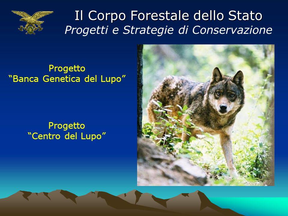 Il Corpo Forestale dello Stato Progetti e Strategie di Conservazione Progetto Banca Genetica del Lupo Progetto Centro del Lupo