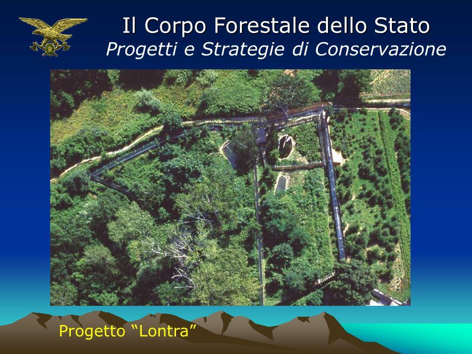 Il Corpo Forestale dello Stato Progetti e Strategie di Conservazione Progetto Lontra