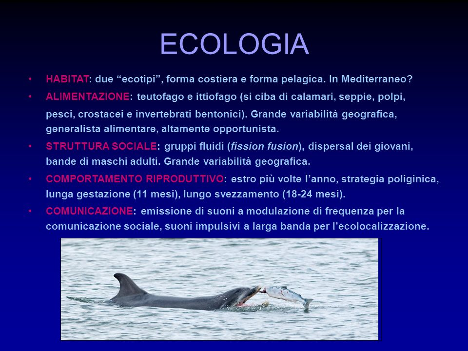 ETOLOGIA STATI COMPORTAMENTALI (feeding, travelling, milling, socializing, resting) EVENTI COMPORTAMENTALI (nuoto, salti, slaps, ecc.)