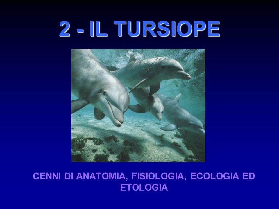 Il tursiope è stato studiato intensamente in numerose aree in tutto il mondo, ed è oggi uno dei cetacei più conosciuti Tursiops truncatus (Montagu, 1821) CLASSIFICAZIONE Regno: Animalia Phylum: Chordata Subphylum: Vertebrata Classe: Mammalia Ordine: Cetacea Subordine: Odontoceta Famiglia: Delphinidae Genere: Tursiops Specie: Tursiops truncatus (Montagu, 1821) Nome comune: tursiope (bottlenose dolphin) Cetacei: più di 85 specie viventi