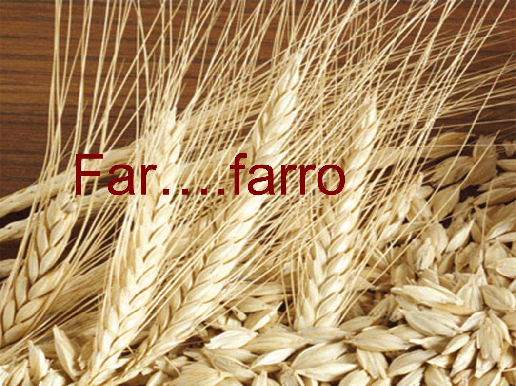 FARRO- è una graminacea di origine antichissime.