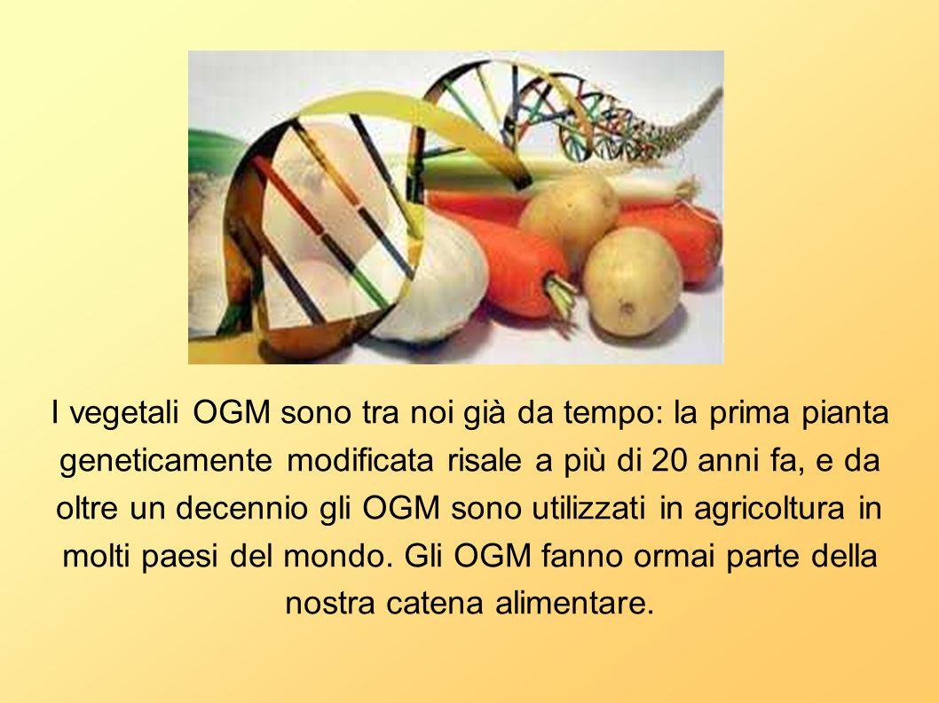 I vegetali OGM sono tra noi già da tempo: la prima pianta geneticamente modificata risale a più di 20 anni fa, e da oltre un decennio gli OGM sono uti