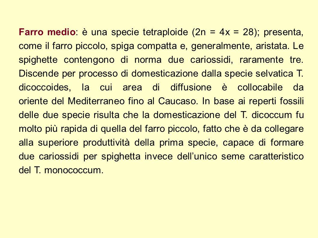Parte edibile 100 % Acqua (g) 10,4 Proteine (g) 15,1 Lipidi (g) 2,5 Glucidi Carboidrati (g) 67,1 Amido (g) 58,5 Minerali Sodio (mg) 18 Potassio (mg) 440 Ferro (mg) 0,7 Calcio (mg) 43 Fosforo (mg) 420 parte cellulosica Fibra alimentare totale 6,8 Fibra alimentare Insolubile 5,75 Fibra alimentare Solubile 1,00 parte cellulosica Fibra alimentare totale 6,8 Fibra alimentare Insolubile 5,75 Fibra alimentare Solubile 1,00