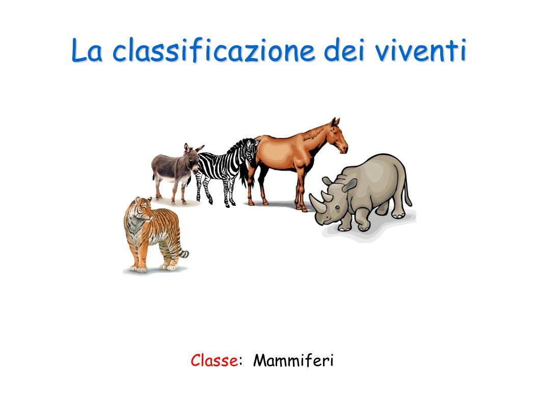 La classificazione dei viventi Classe: Mammiferi