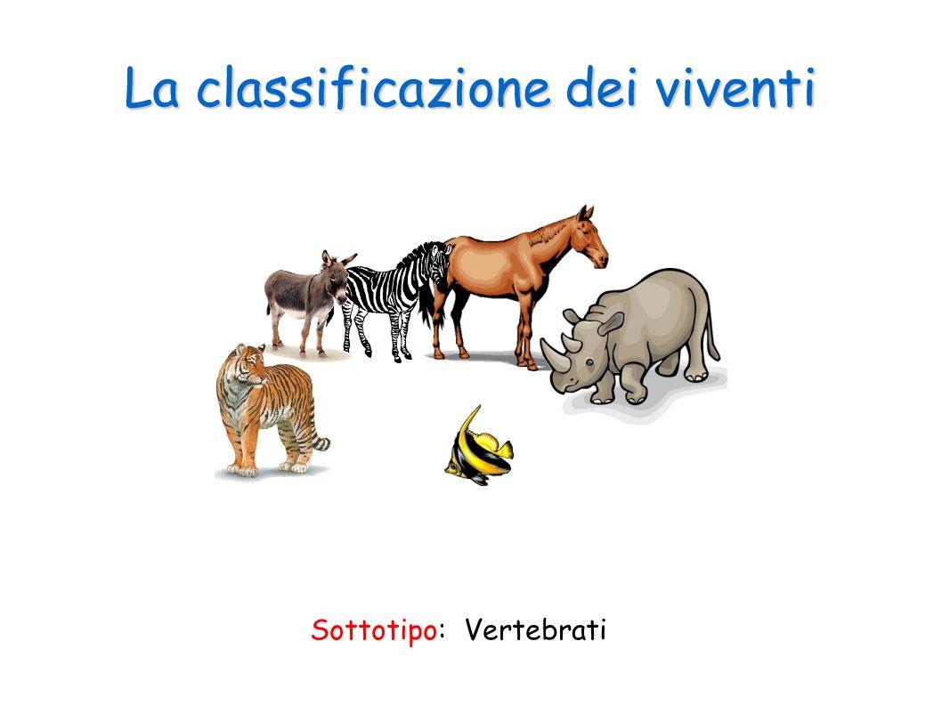 La classificazione dei viventi Sottotipo: Vertebrati