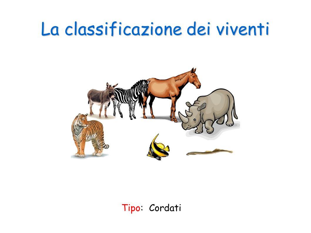 La classificazione dei viventi Tipo: Cordati