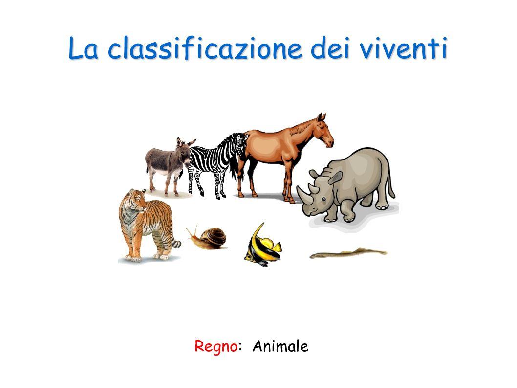 La classificazione dei viventi Regno: Animale
