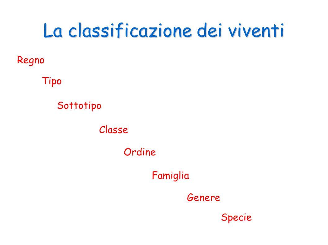 La classificazione dei viventi Regno Tipo Sottotipo Classe Ordine Famiglia Genere Specie