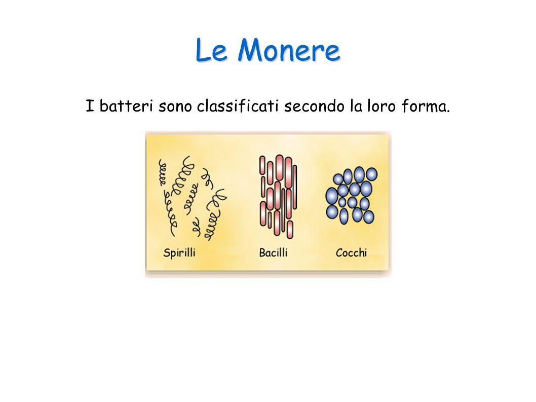 Le Monere I batteri sono classificati secondo la loro forma.