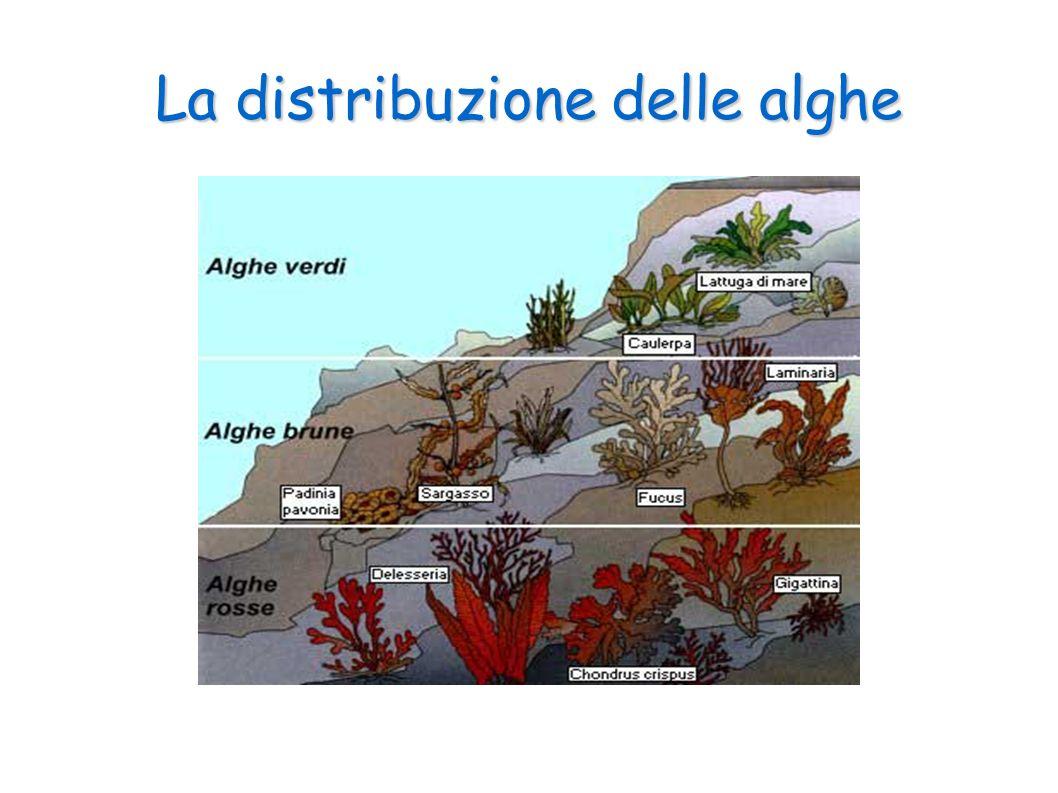 La distribuzione delle alghe