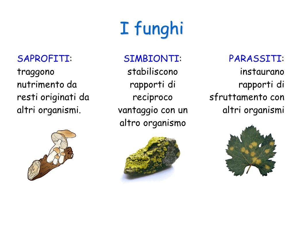I funghi SAPROFITI: traggono nutrimento da resti originati da altri organismi. SIMBIONTI: stabiliscono rapporti di reciproco vantaggio con un altro or