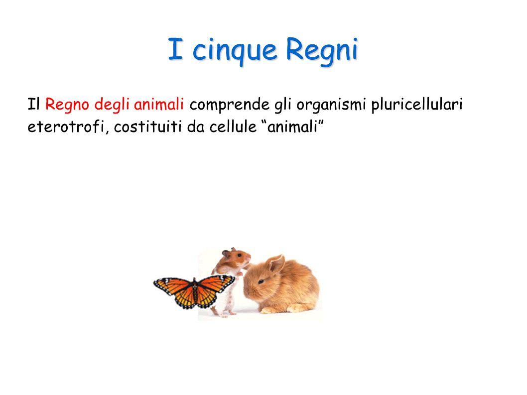 I cinque Regni Il Regno degli animali comprende gli organismi pluricellulari eterotrofi, costituiti da cellule animali