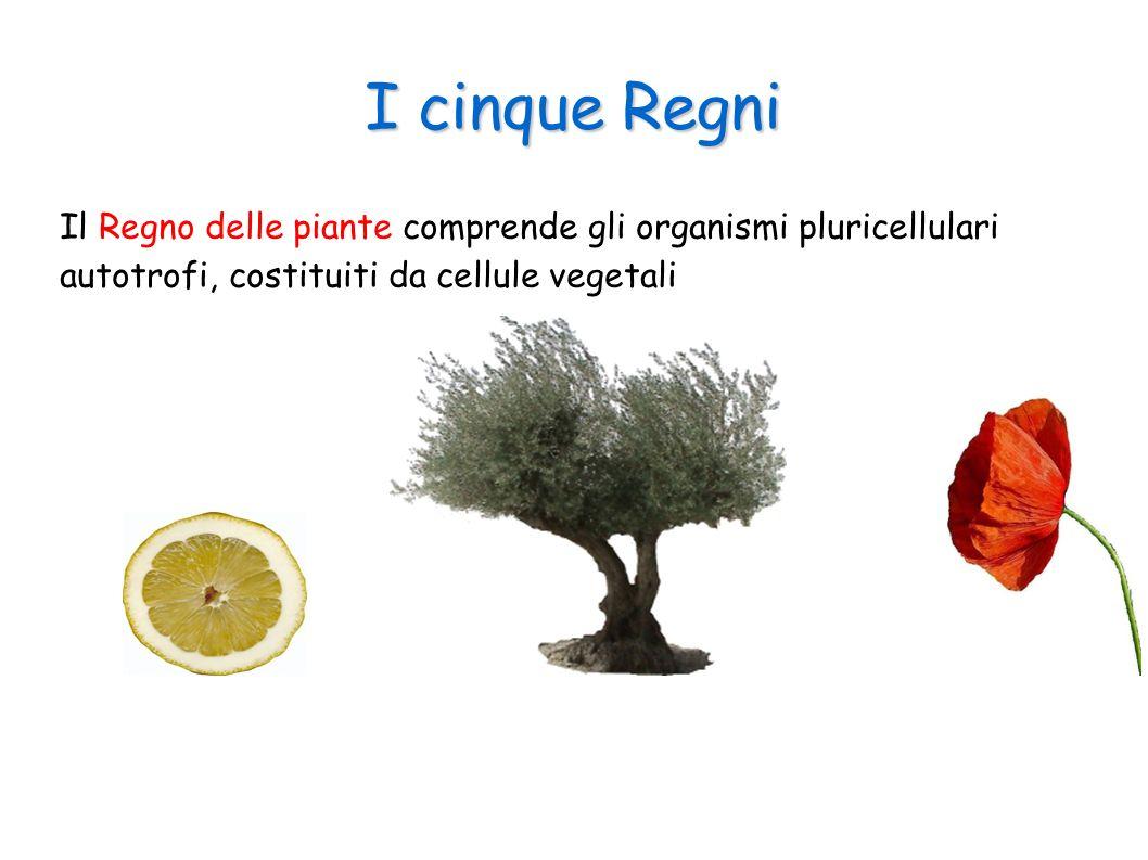 I cinque Regni Il Regno delle piante comprende gli organismi pluricellulari autotrofi, costituiti da cellule vegetali