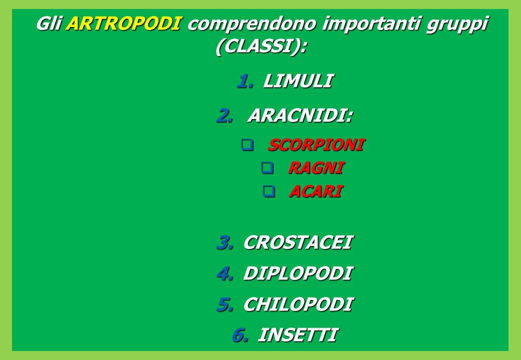 Gli ARTROPODI comprendono importanti gruppi (CLASSI): 1.LIMULI 2.