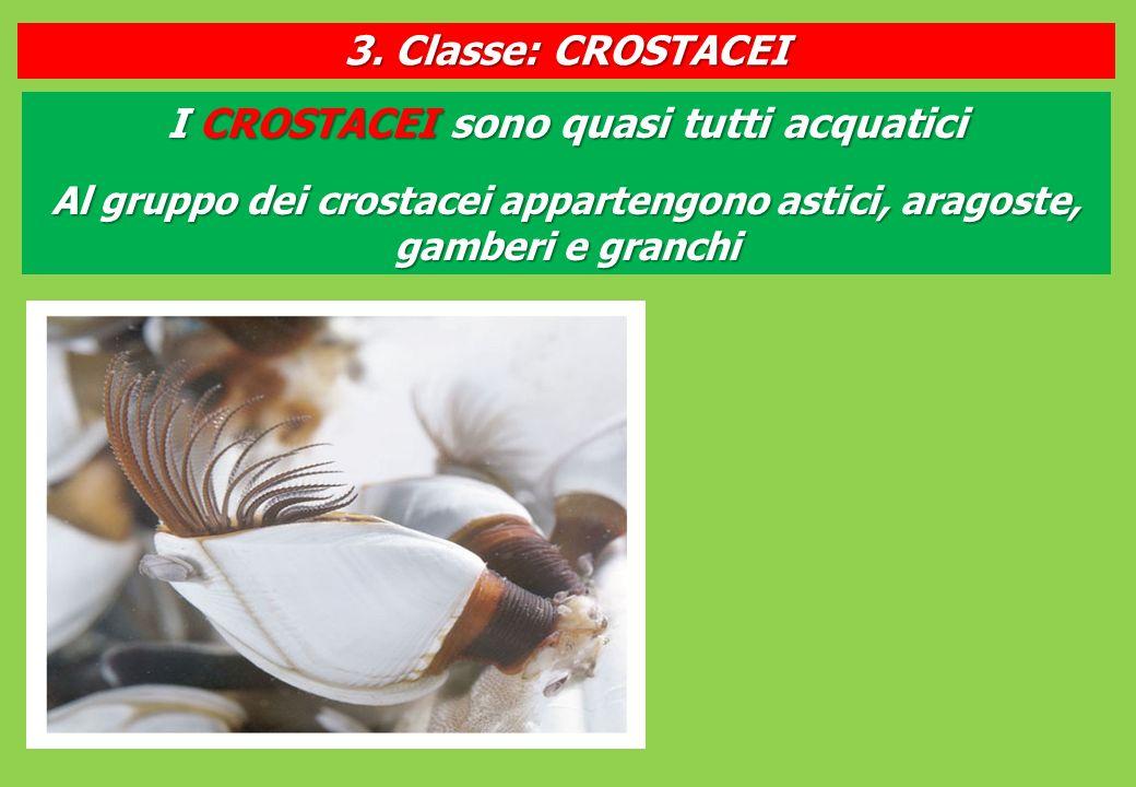 I CROSTACEI sono quasi tutti acquatici Al gruppo dei crostacei appartengono astici, aragoste, gamberi e granchi 3.