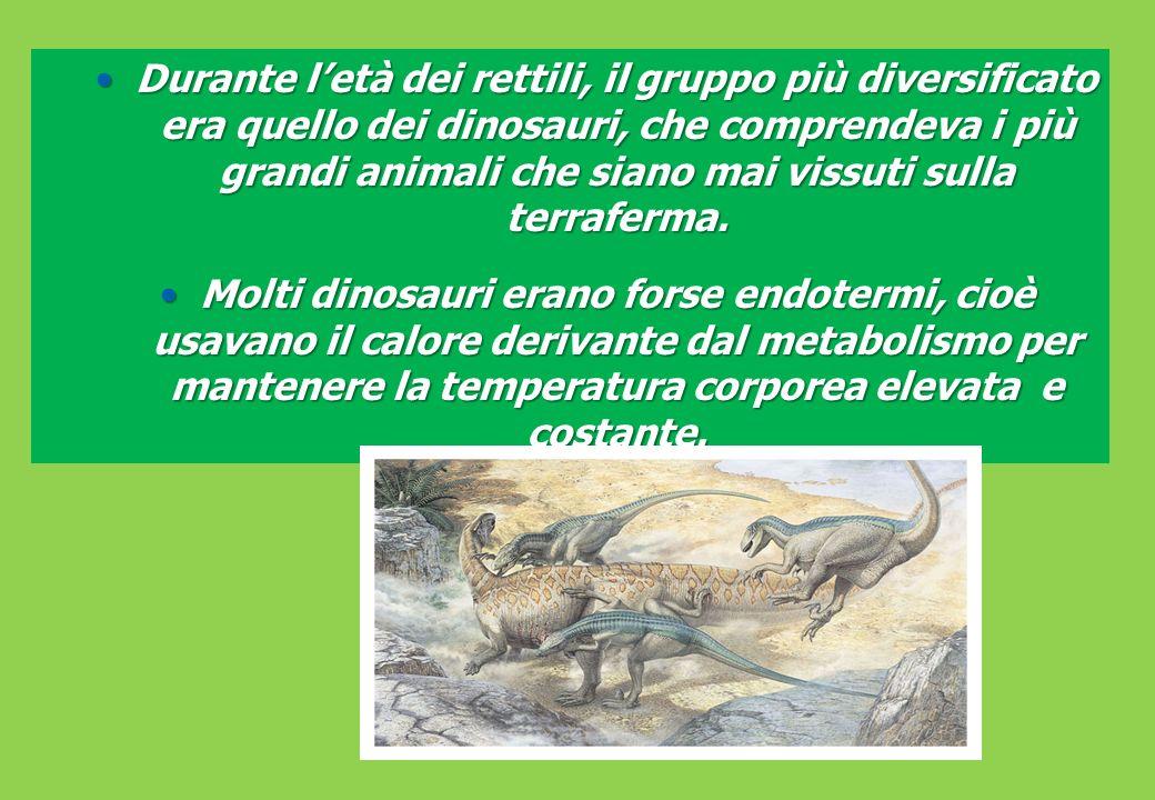 Durante letà dei rettili, il gruppo più diversificato era quello dei dinosauri, che comprendeva i più grandi animali che siano mai vissuti sulla terraferma.Durante letà dei rettili, il gruppo più diversificato era quello dei dinosauri, che comprendeva i più grandi animali che siano mai vissuti sulla terraferma.