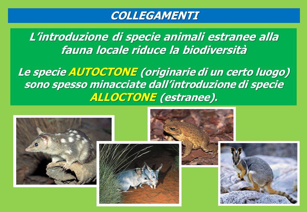 COLLEGAMENTI Lintroduzione di specie animali estranee alla fauna locale riduce la biodiversità Le specie AUTOCTONE (originarie di un certo luogo) sono spesso minacciate dallintroduzione di specie ALLOCTONE (estranee).