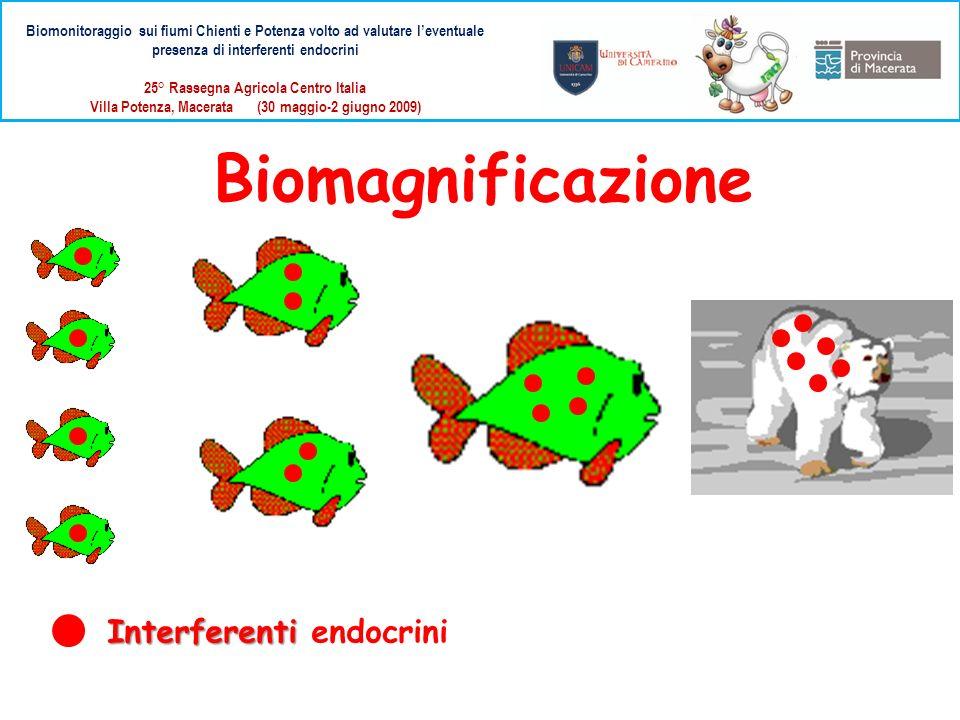 Interferenti Interferenti endocrini Biomagnificazione Biomonitoraggio sui fiumi Chienti e Potenza volto ad valutare leventuale presenza di interferent