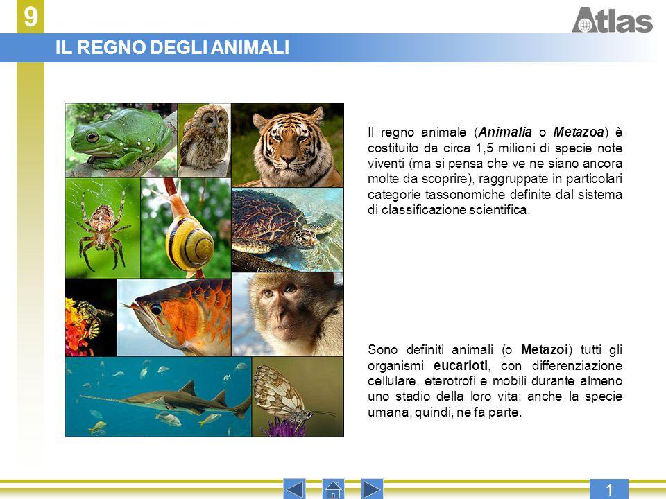9 1 Premere invio per procedere con la presentazione. Sono definiti animali (o Metazoi) tutti gli organismi eucarioti, con differenziazione cellulare,