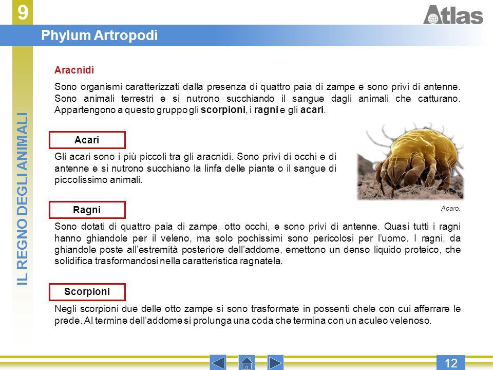 9 12 Gli acari sono i più piccoli tra gli aracnidi. Sono privi di occhi e di antenne e si nutrono succhiano la linfa delle piante o il sangue di picco