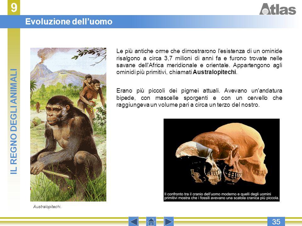 9 35 Le più antiche orme che dimostrarono l'esistenza di un ominide risalgono a circa 3,7 milioni di anni fa e furono trovate nelle savane dell'Africa