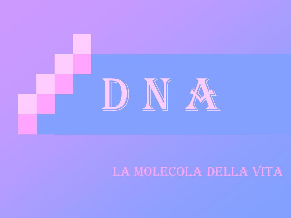 D desossiribo N nucleic A acid