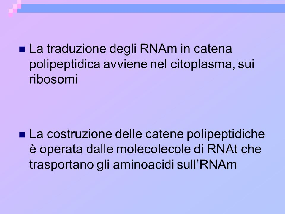 La traduzione degli RNAm in catena polipeptidica avviene nel citoplasma, sui ribosomi La costruzione delle catene polipeptidiche è operata dalle molec