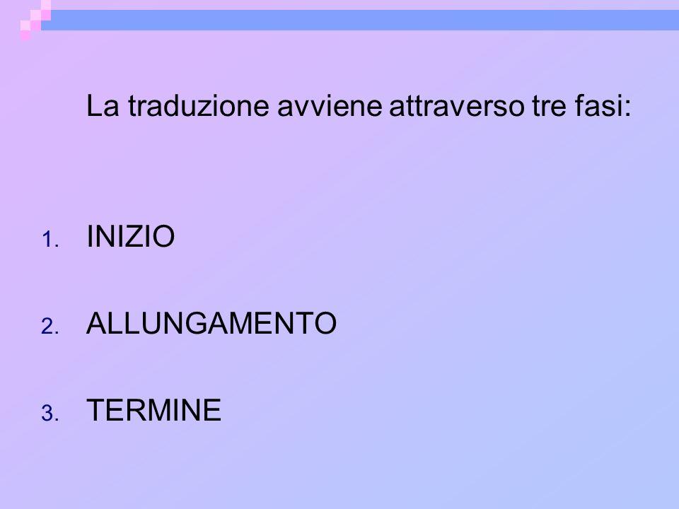 La traduzione avviene attraverso tre fasi: 1. INIZIO 2. ALLUNGAMENTO 3. TERMINE